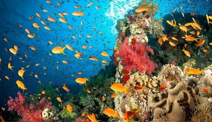 Snorkel Raja Ampat