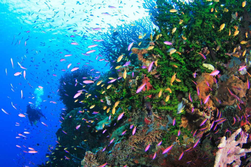 Spice Islands diving